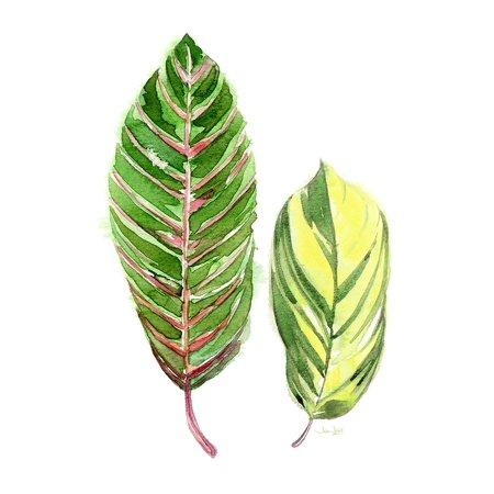 Tropical Variegated Leaf Poster Print by Jin Jing Variegated Metal Leaf