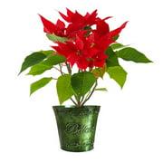 Evergreen Enterprises, Inc Metal Pot Planter (Set of 3)