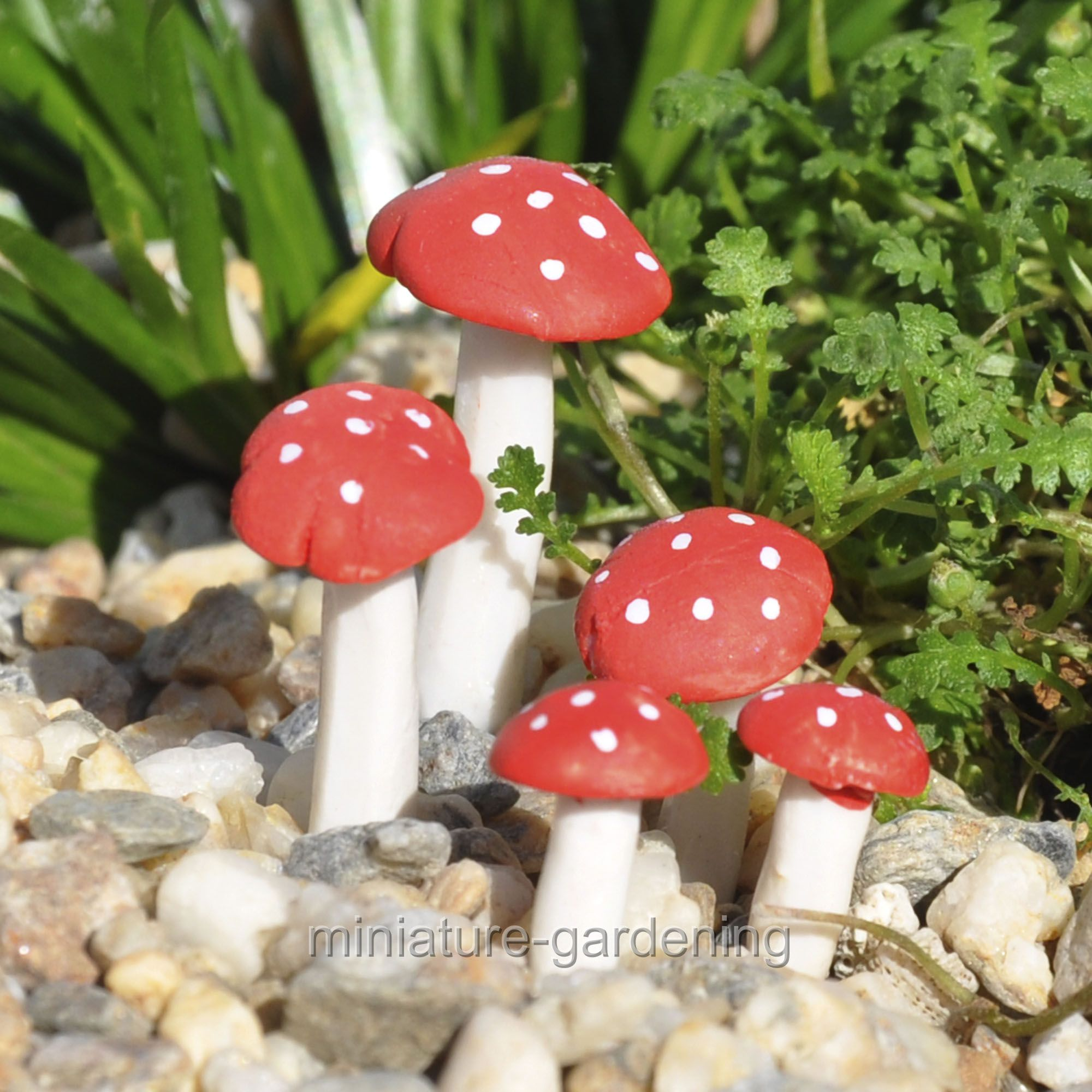Miniature Fly Agaric Mushroom Pics, 5 Piece Set for Miniature Garden, Fairy Garden