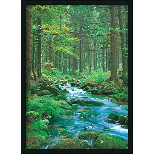 Amanti Art Forest Creek Framed Photographic Print