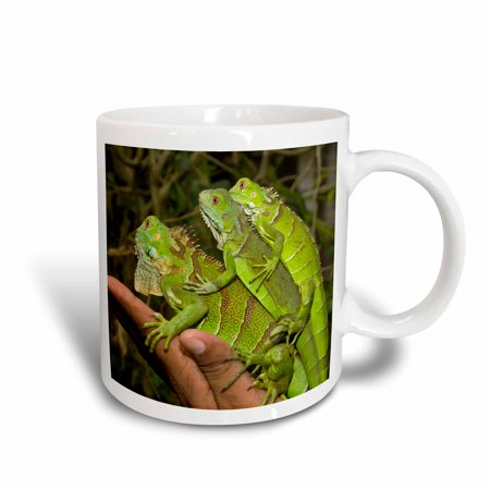 3dRose Juvenile green iguana lizards, San Ignacio, Belize - SA02 WSU0038 - William Sutton, Ceramic Mug, 15-ounce
