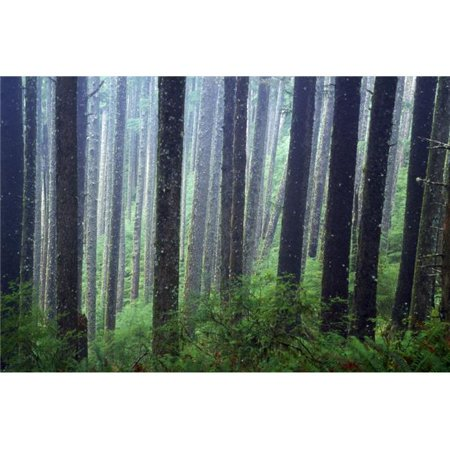 Posterazzi DPI1788370 Trees in Fog Poster Print by Natural Selection Craig Tuttle, 18 x 12 - image 1 de 1
