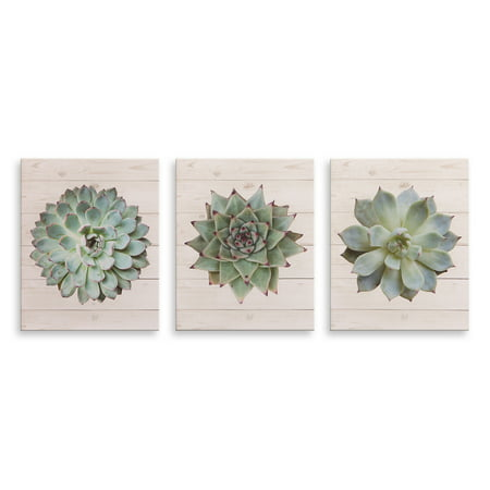 Patton Wall Decor 8x10 Succulents on Wood, Set of 3 Canvas Art