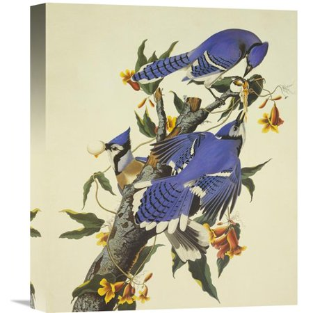 Global Gallery Blue Jay By John James Audubon Painting Print On Wrapped Canvas