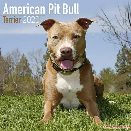 American Pit Bull Terrier Calendar 2020 - American Pit Bull Terrier Dog Breed Calendar - American Pit Bull Terriers Premium Wall Calendar (America 2008 Calendar)