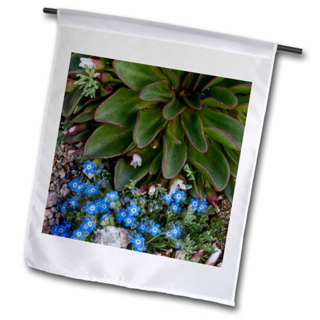 3dRose USA, Colorado, American Basin, Alpine Spring Beauty and Forget-Me-Not - Garden Flag, 12 by 18-inch (Party America Colorado Springs)
