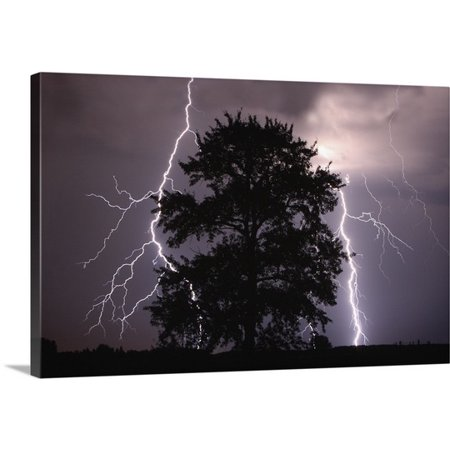 Great Big Canvas Richard Wear Premium Thick Wrap Canvas Entitled Lightning Strikes In The Sky Behind A Tree  Alberta  Canada
