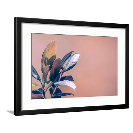 Tropical House Plant on a Warm Red Orange Background Framed Print Wall Art By KatDmnt
