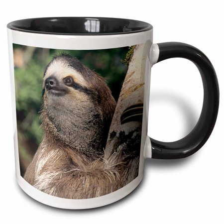 3dRose Three-toed Sloth wildlife, Costa Rica - SA22 KSC0126 - Kevin Schafer - Two Tone Black Mug, 11-ounce