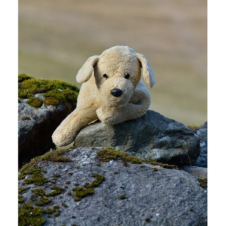 LAMINATED POSTER Plush Dog Soft Toy Teddy Bear Stuffed Animal Dog Poster 24x16 Adhesive - Teddy Bear Dog