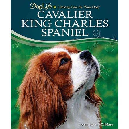 Cavalier King Charles Spaniel by
