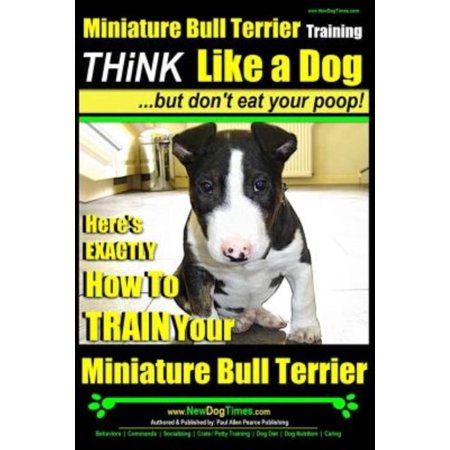 Miniature Bull Terrier Training   Think Like A Dog  But Don T Eat Your Poop   Heres Exactly How To Train Your Miniature Bull Terrier