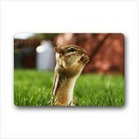 WinHome Lovely Squirrel Doormat Floor Mats Rugs Outdoors/Indoor Doormat Size 23.6x15.7