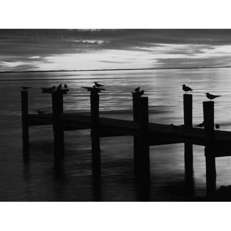 View of Birds on Pier at Sunset, Fort Myers, Florida, USA Print Wall Art By Adam (Stores In Fort Myers Florida)