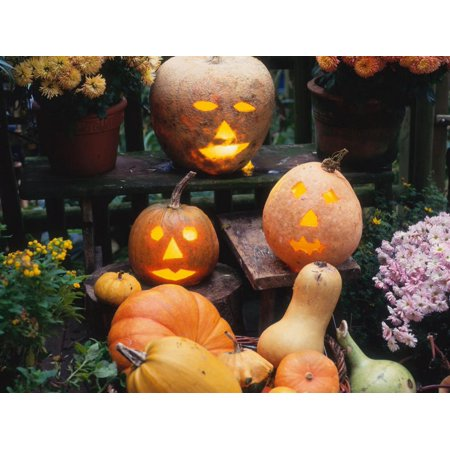 Different Kinds of Pumpkin and Pumpkin Faces at Halloween (Cucurbita Sp.) Print Wall Art By Reinhard - Halloween Hexe Kind