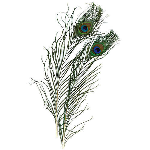 Peacock Eye Feathers, 2/Pkg, Natural