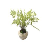Gold Eagle USA Fern and Moss Desk Top Plant in Decorative Vase