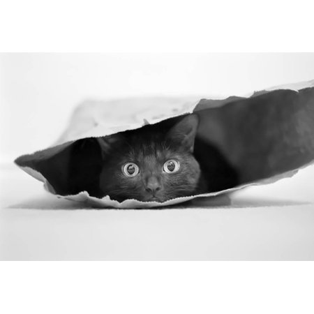 - Cat in a Bag Print Wall Art By Jeremy Holthuysen