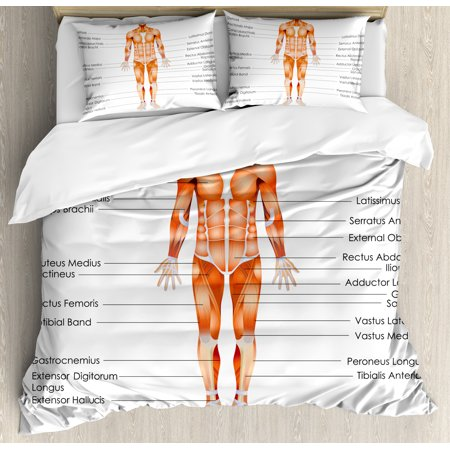 Human Anatomy Queen Size Duvet Cover Set, Muscle System Diagram of Man Body Features Biological Elements Medical Heath Image, Decorative 3 Piece Bedding Set with 2 Pillow Shams, Coral, by