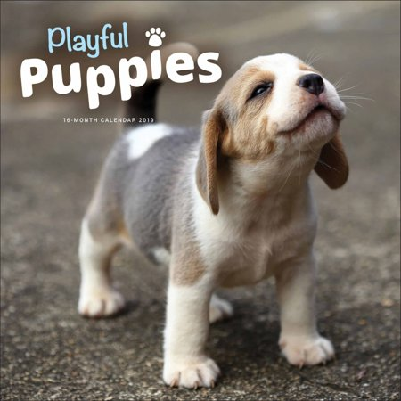 Angel Calendar Print (2019 Playful Puppies 2019 Wall Calendar, Cute Puppies by Vista Stationery &)
