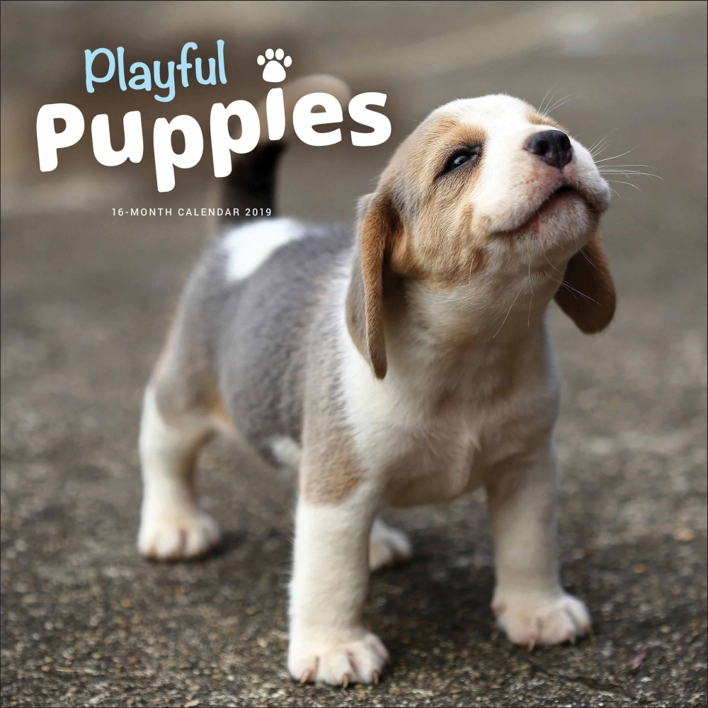 2019 Playful Puppies 2019 Wall Calendar, Cute Puppies by Vista Stationery & Prin