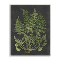 Stupell Industries Botanical Drawing Green Black Design Wall Plaque by Lettered and Lined