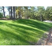 Best Bermuda Grass Seeds - Sahara Bermuda Grass Seed - 5 Lbs Review