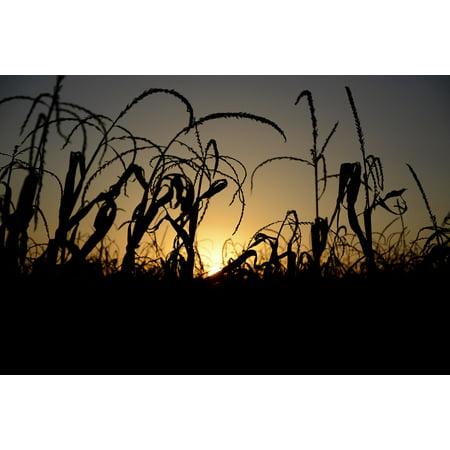 Canvas Print Sol Sunset Landscape Horizon Silhouette Tree Stretched Canvas 10 x 14