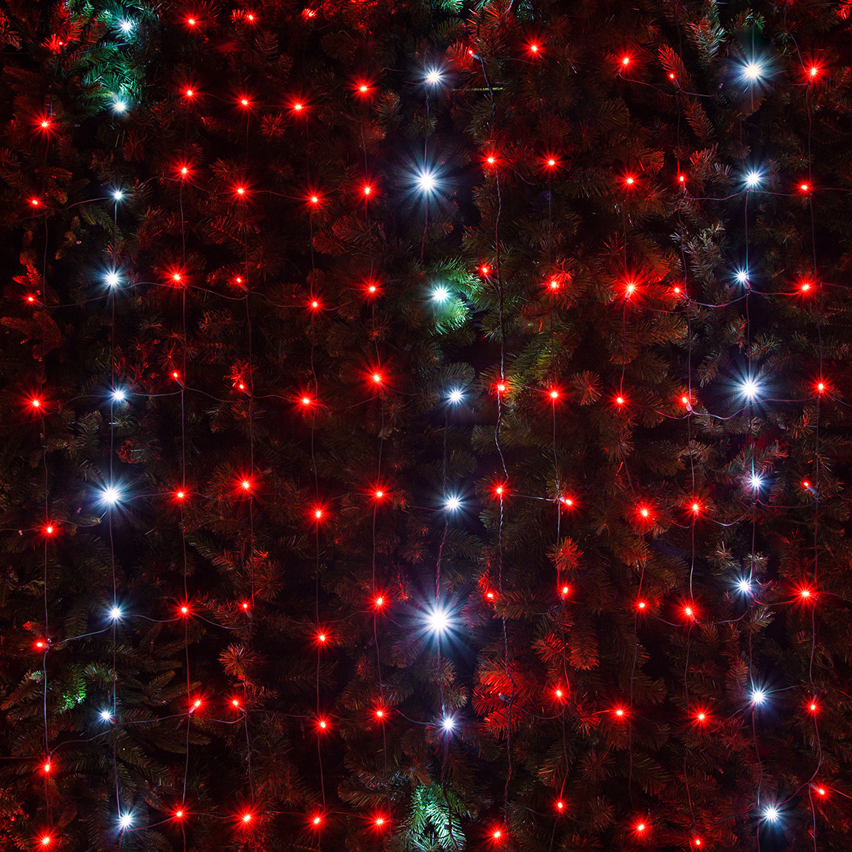 Wintergreen Lighting Red/Cool White Twinkle LED Net Lights Christmas ...