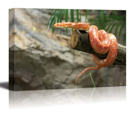 "Canvas Prints Wall Art - Closeup of a Corn Snake on a Branch | Modern Wall Decor/Home Decor Stretched Gallery Canvas Wrap Giclee Print & Ready to Hang - 16"" x 24"""