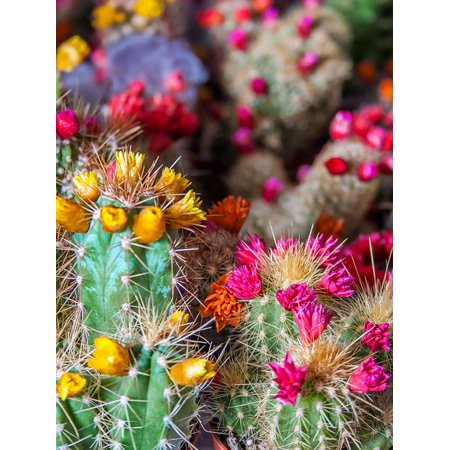 Canvas Print Sting Nature Cactus Flowers Bloom Prickly Spur Stretched Canvas 32 x 24