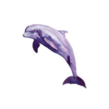 Dolphin Home Wall Shelf Decor Animal Decorations Watercolor Prints](Shelf Decorations)
