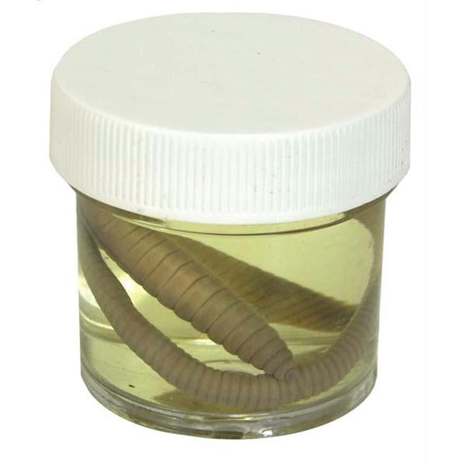 Olympia Sports 13698 Earth Worms - 12 in. Plus - Pail of 10