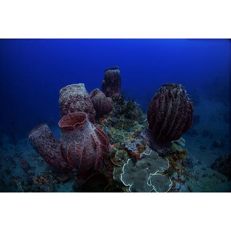 Group of barrel sponge in the deep reefs of the Banda Sea Indonesia Poster Print by Aaron WongStocktrek - Deep Reef