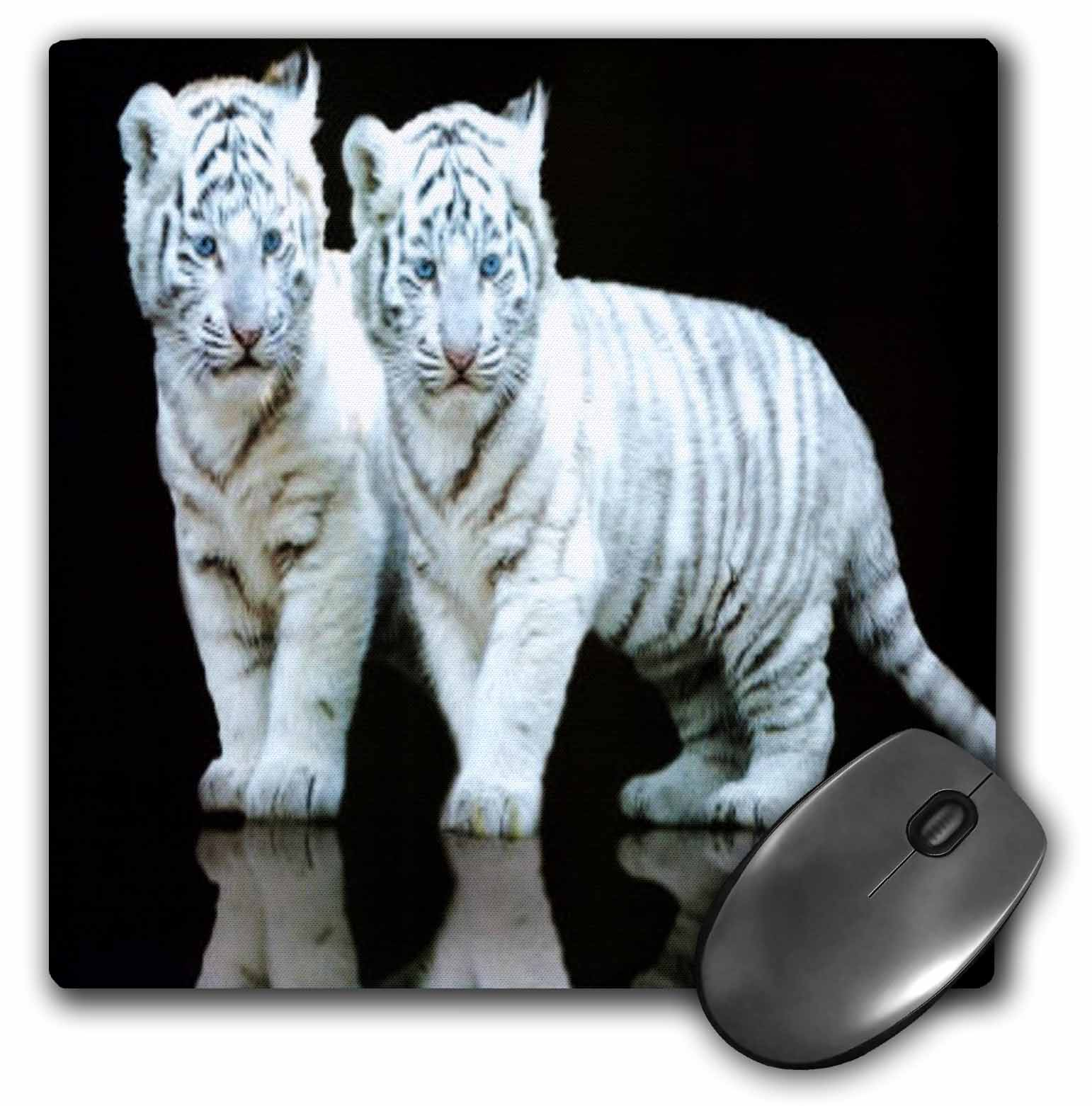 3dRose White Tiger Cubs, Mouse Pad, 8 by 8 inches