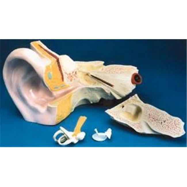"Olympia Sports 12900 14"" x 7"" x 8 1/2"" Giant Ear Model"