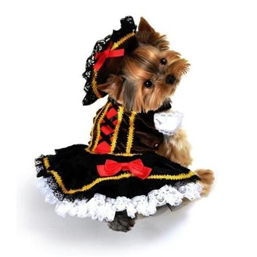Anit Accessories AP1066-S Swashbuckler Pirate Girl Dog Costume - Small