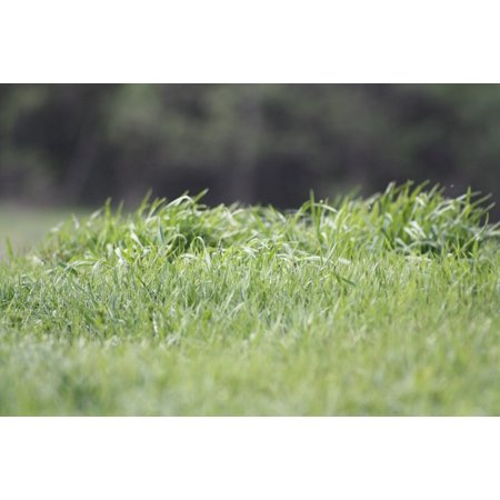 Spring Grass (Canvas Print Shades of Green Grass Nature Macro Green Spring Stretched Canvas 10 x 14)