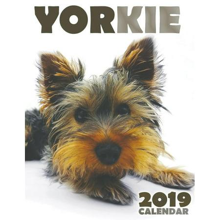 Yorkie 2019 Calendar (Paperback)