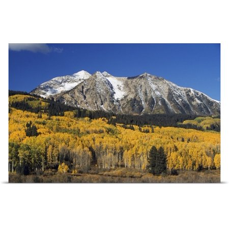 Great Big Canvas David Ponton Poster Print Entitled Aspen Trees In Autumn  Rocky Mountains  Colorado