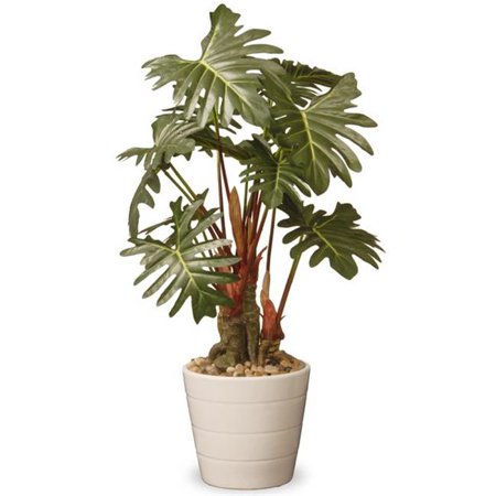 National Tree  21 in. Philodendron Plant In Ceramic Pot - Green
