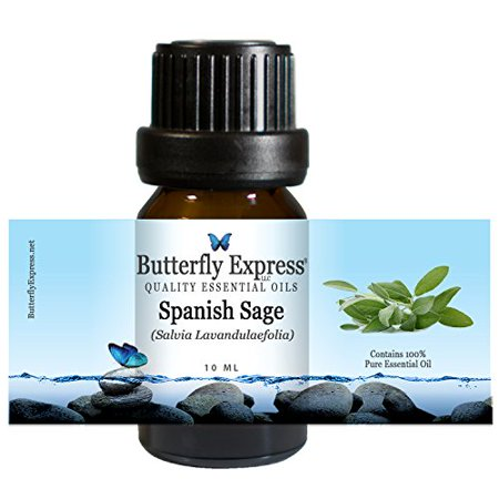 Spanish Sage (Spanish Sage Essential Oil 10ml - 100% Pure by Butterfly)