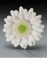 Cake Decoration Gum Paste Gerbera Daisy- White