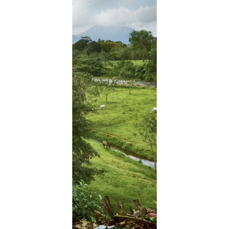 View of the Arenal Volcano National Park Costa Rica Canvas Art - Panoramic Images (27 x