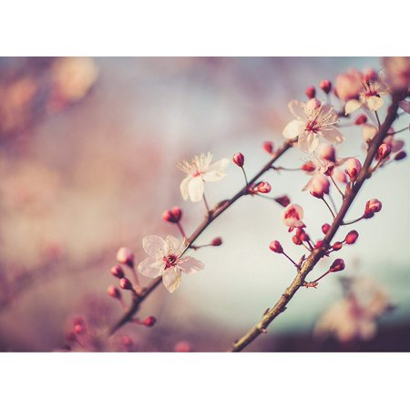 Decorator Spring Wound Wall - Cherry Blossom In Spring Home Wall Decor Art Decorations Prints, Small Signs - 7.5x10.5