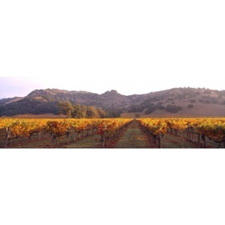 Stags Leap Wine Cellars Napa Valley CA Poster Print by Panoramic Images (38 x 12) - Halloween Store Napa Ca