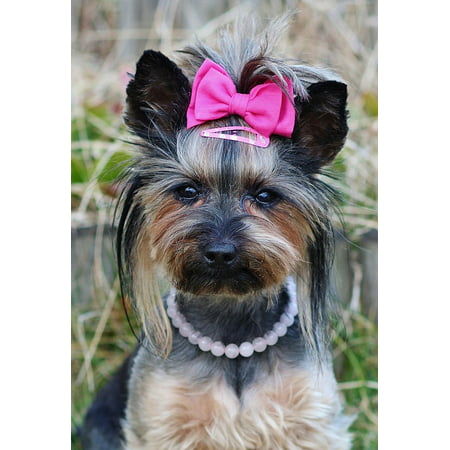LAMINATED POSTER Pink Bow Nice Yorkie Dog Pretty Poster Print 24 x