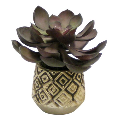 Bungalow Rose Desktop Succulent Plant in Decorative Vase