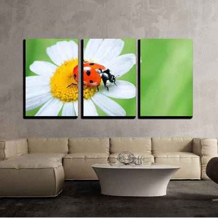 wall26 - 3 Piece Canvas Wall Art - Ladybug on Daisy in the Grass - Modern Home Decor Stretched and Framed Ready to Hang - 24