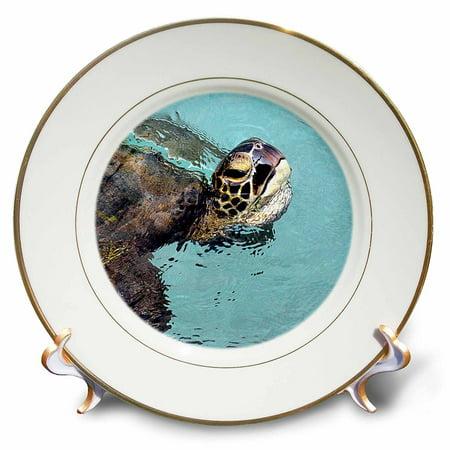 3dRose Skilpadde, Pasific green turtle, Hawaiian green sea turtle, Hawaiian name is Honu, Porcelain Plate,